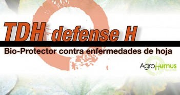 TDH-defense-H