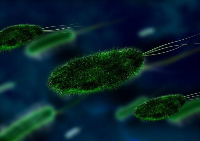 Pic.1. Los micororganismos son una parte fundamental del suelo