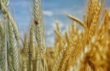 Los cultivos equilibrados son cultivos sanos